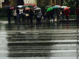 Array of bright umbrellas during St. Petersburg downpour