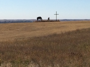Ranch sculpture at the crest of my gravel road run